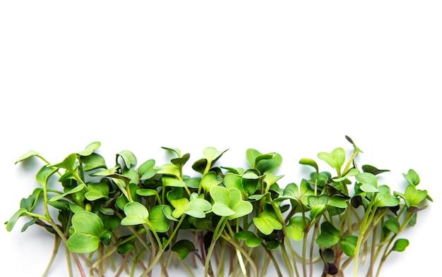 Mikro zielenie na białym. widok z góry