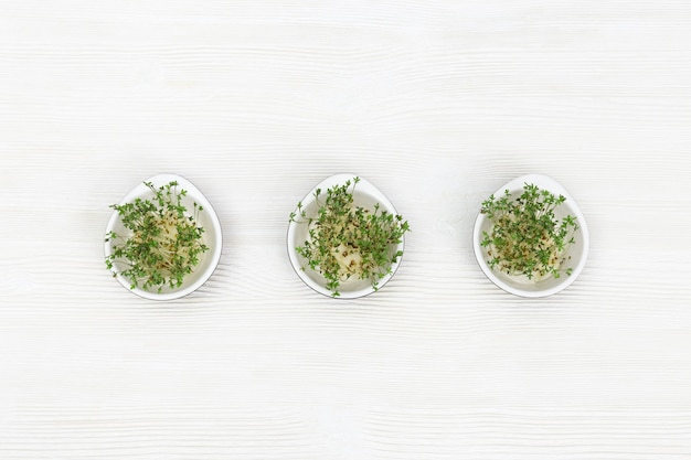 Mikro zieleniny rosnące w małej okrągłej misce