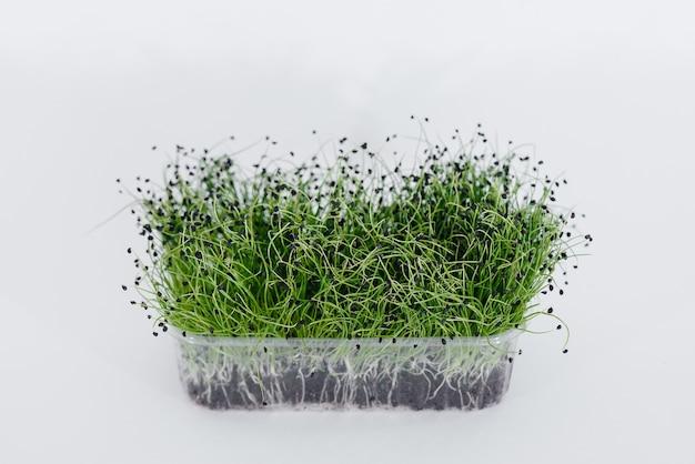 Mikro-zielona cebula kiełki zbliżenie na białym w garnku z glebą