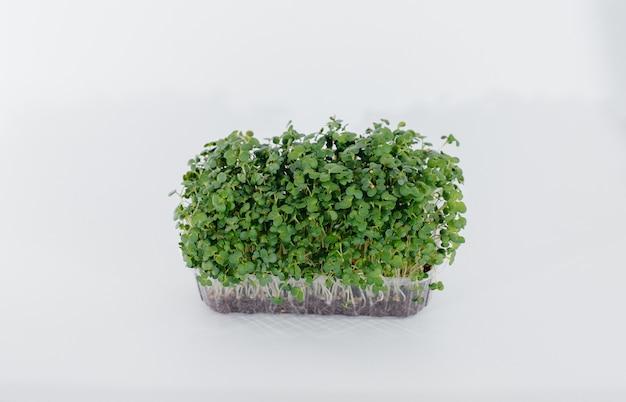 Mikro-zielona musztarda kiełkuje na białym stole w doniczce z ziemią. zdrowe jedzenie i styl życia.