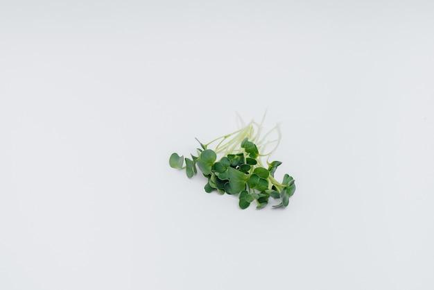 Mikro-zielone kiełki zbliżenie na białym tle z wolnej przestrzeni. zdrowa żywność i styl życia.