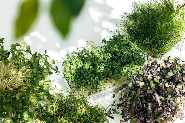 Mikro zielone krzewy w tacach na białym tle widok z góry