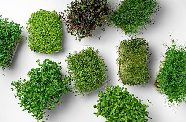 Mikro zielone tace na białym tle