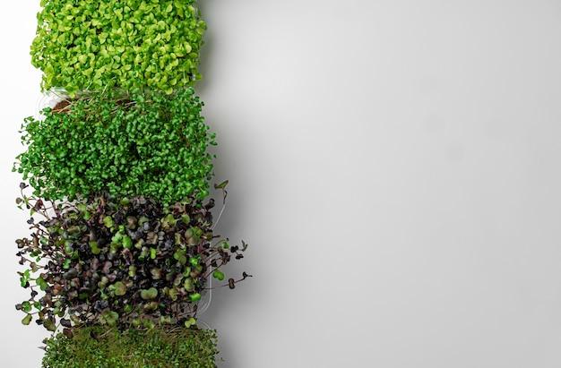 Mikro zielone tace na szarym tle widok z góry