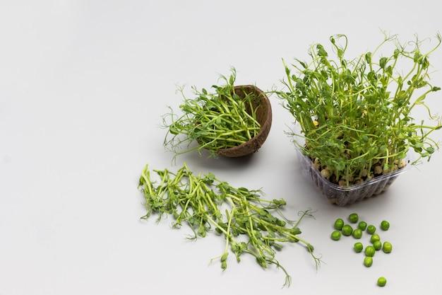 Mikrogozielone kiełki grochu z korzeniami i ziemią w plastikowym pojemniku
