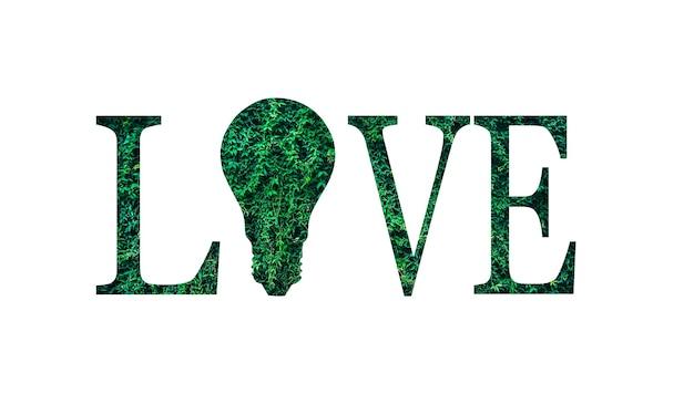 Miłość słowo z zielonych liści na białym tle. żarówka. koncepcja ochrony środowiska. ocal przyrodę.