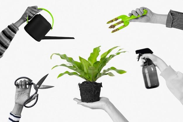 Miłośnik roślin tło roślina doniczkowa hobby ogrodnicze