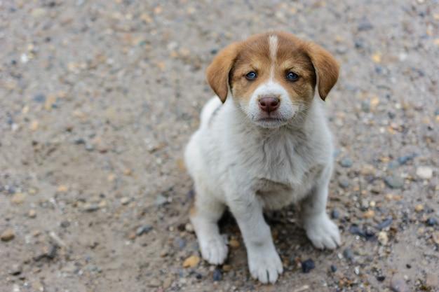 Miły, słodki, mały, głodny, biedny, porzucony, bezdomny szczeniak chce jeść i znaleźć pana. pojęcie ochrony bezpańskich zwierząt. interakcja ludzi i zwierząt.