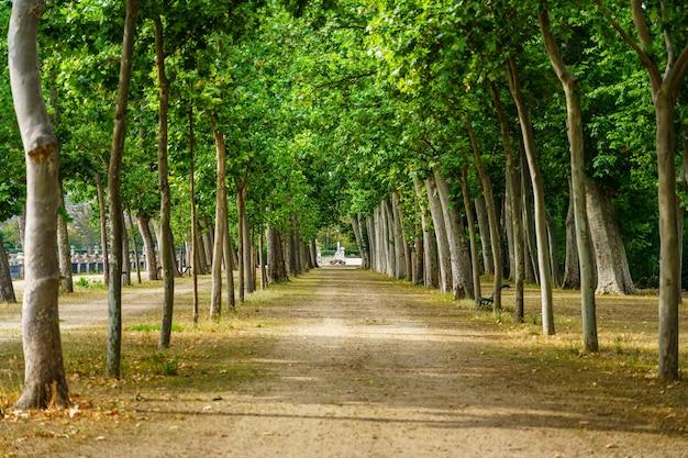 Miły spacer po publicznym parku z dużymi drzewami i ławkami do odpoczynku?