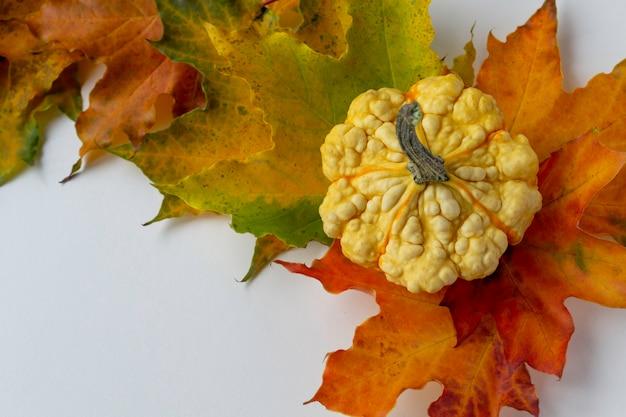 Mini dekoracyjna dynia na liściach klonu. jesienny księżyc