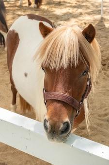 Mini karłowaty koń na pastwisku