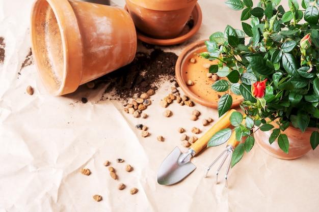 Mini róże w ceramicznych donicach i narzędziach ogrodniczych z wolnego miejsca na tekst. sadzenie róż w doniczce w domu.