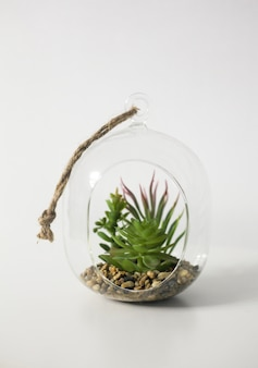 Mini soczysty ogród w szklanym terrarium