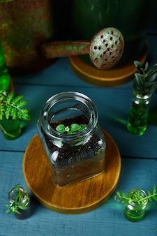 Mini szklane wazony i butelka z zielonymi liśćmi, roślinami.
