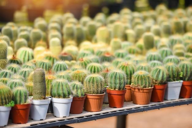 Miniaturowa doniczka z kaktusami ozdobiona jest w ogrodzie - różne rodzaje pięknego targu kaktusowego lub farmy kaktusów
