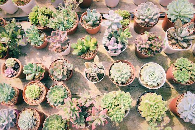 Miniaturowa soczysta roślina w doniczce różne rodzaje mix kolekcji zdobią w ogrodowej farmie kaktusów