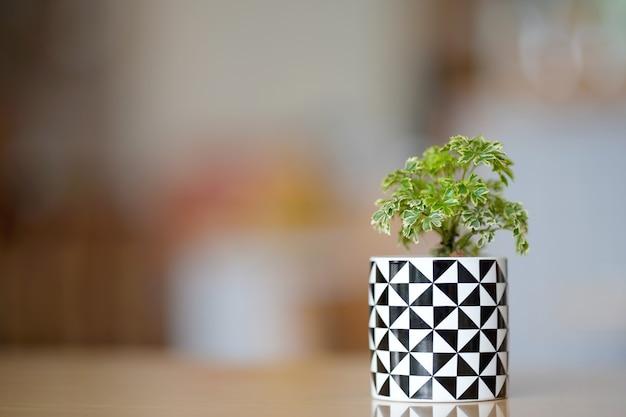 Miniaturowe drzewka w doniczkach na stole do wnętrz domowych ze względu na ich piękno i pomoc w oczyszczaniu powietrza