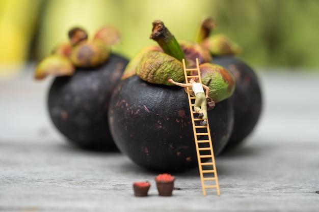 Miniaturowi ludzie, rolnik wspinający się po drabinie do zbierania mangostanu z wielkiego mangostanu.
