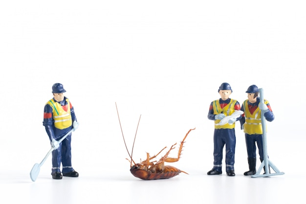 Miniaturowi pracownicy analizuje martwego karalucha