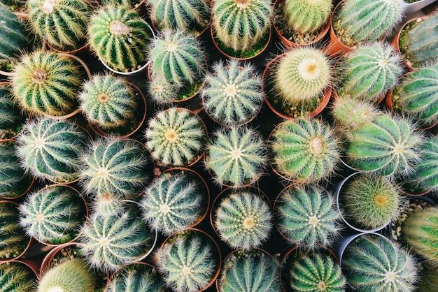 Miniaturowy kaktusowy garnek dekoruje w ogródzie