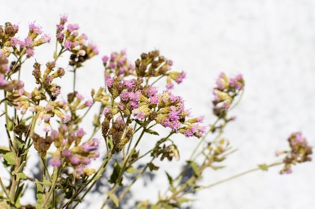 Minimalistyczna kompozycja naturalnej rośliny