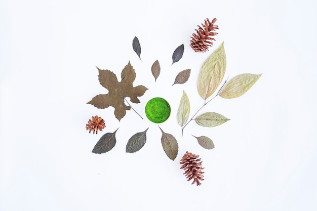 Minimalistyczna koncepcja jesień. suszone liście, kwiaty sosny na białym tle papieru