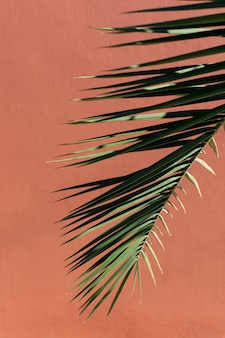 Minimalistyczny asortyment roślin naturalnych na monochromatycznym tle