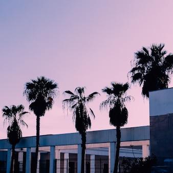Minimalistyczny design. palmy miejski tropikalny fioletowy nastrój mody