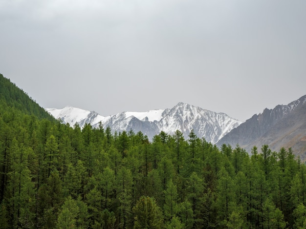 Minimalistyczny krajobraz gór atmosferycznych z dużym ośnieżonym szczytem górskim nad alpejskim zielonym lasem. niesamowita minimalistyczna sceneria z lodowcem na skałach.