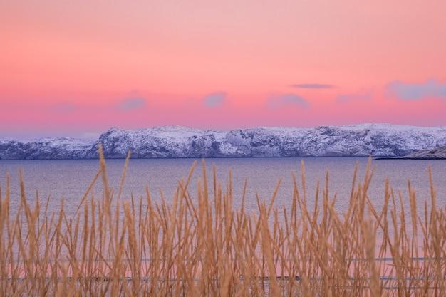 Minimalistyczny północny krajobraz z arktycznymi wzgórzami na horyzoncie i rozmytą, rzadką roślinnością na jasnym różowym niebie.