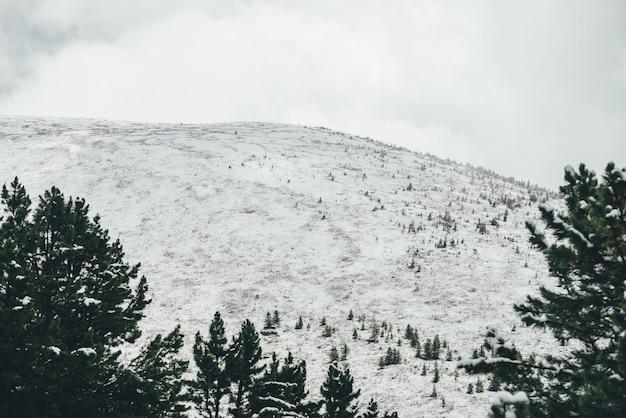 Minimalistyczny zimowy krajobraz z dużą zaśnieżoną górą z drzewami pod zachmurzonym niebem. minimalny widok na góry przez zielone drzewa iglaste do białego śniegu w pochmurnej pogodzie. śnieżna sceneria alpejska.