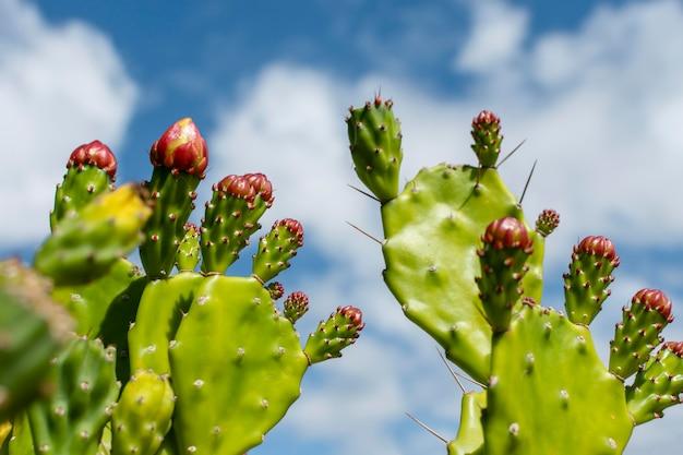 Minimalna aranżacja naturalnej rośliny
