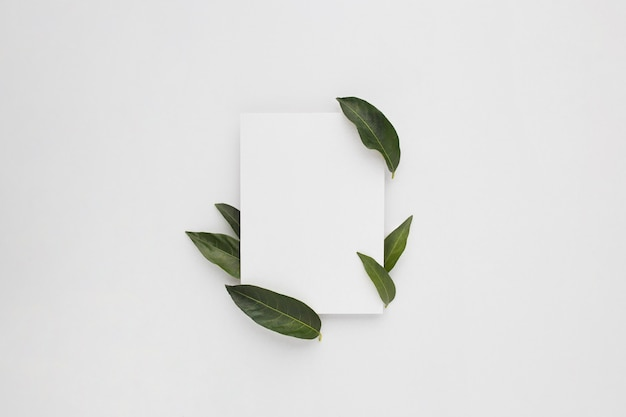 Minimalna kompozycja z czystym papierem z zielonymi liśćmi, widok z góry