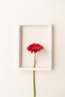 Minimalna koncepcja. czerwona gerbera w białej oprawie, flat lay