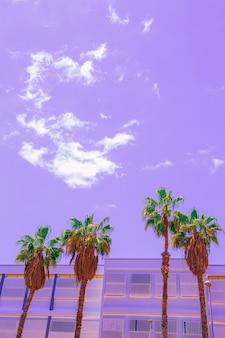 Minimalna tropikalna fioletowa sztuka. palma. wyspy kanaryjskie