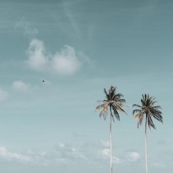 Minimalne tropikalne palmy kokosowe latem na tle nieba.