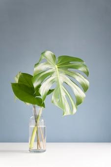 Minimalny asortyment liści tropikalnych