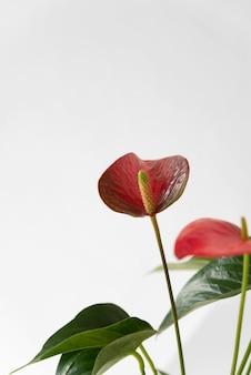 Minimalny asortyment roślin tropikalnych