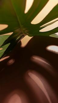 Minimalny układ liści tropikalnych