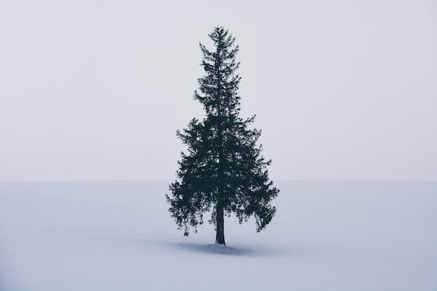 Minimalny zimowy krajobraz, pojedynczy świerk na pokrytym śniegiem wzgórzu podczas opadów śniegu w zimowy dzień, kopia przestrzeń, choinka w biei, hokkaido, japonia
