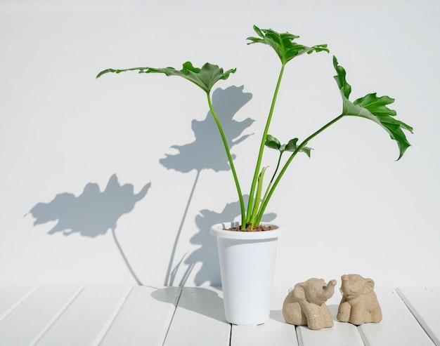 Mininmal stylowy posąg słonia i roślina doniczkowa w nowoczesnym garnku na białym drewnianym stole w pokoju, egzotyczne drzewo liściaste philodendron selloum z długim cieniem i miejscem na produkty