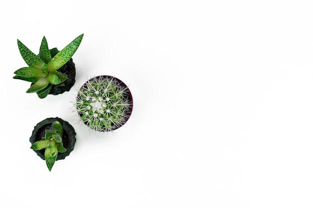 Ministerstwo spraw wewnętrznych roślina w garnku na białej tło układu kopii przestrzeni
