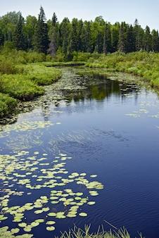 Minnesota las i rzeka
