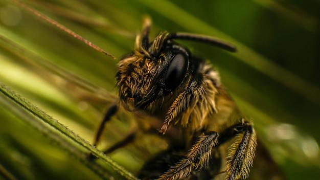 Miód mała pszczółka w zielonej trawie, letni dzień