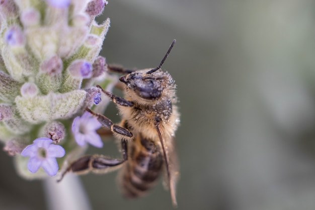 Miodowa pszczoła zapyla żółtego kwiatu w wiosny łące. sezonowa scena przyrodnicza. filtr zdjęć kosmetycznych.