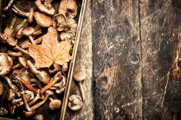 Miodowy miód grzybów w starym pudełku