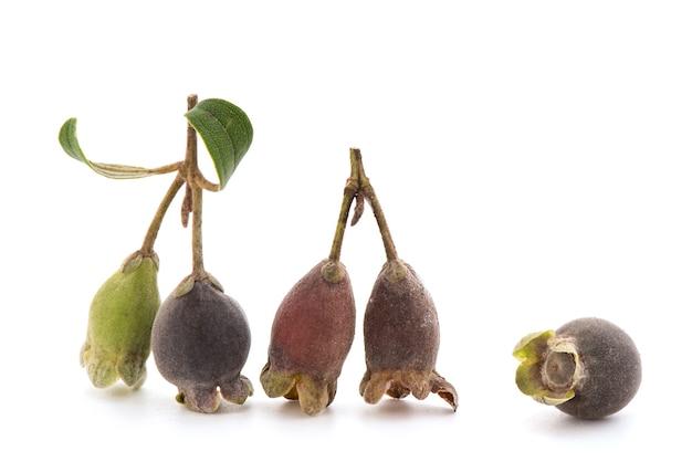 Mirt puszysty lub rhodomyrtus tomentosa owoce na białym tle.