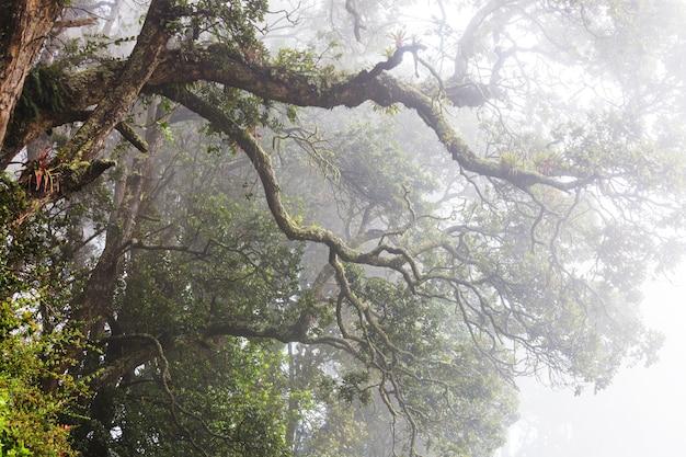 Misty rainforest w kostaryce w ameryce środkowej