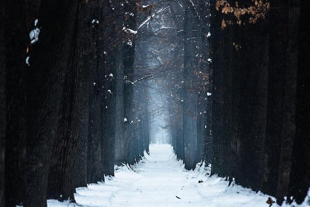 Mistyczna aleja dębowa zima nocą