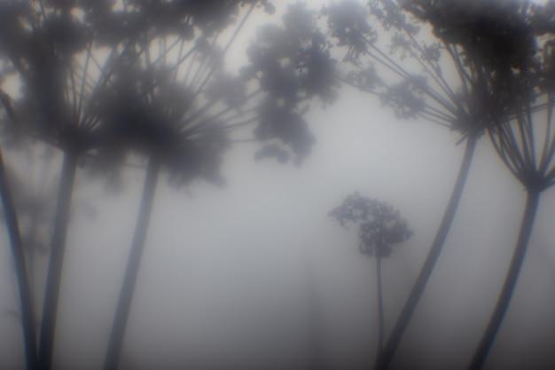 Mistyczna mglista dżungla kraju mikroświata
